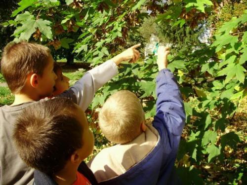 2008-10-zber-gastanov-03-velke